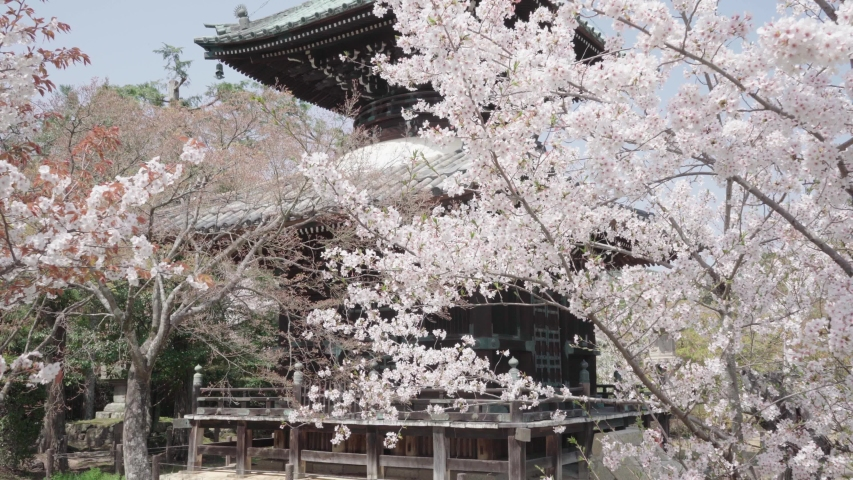 Cherry blossoms in Kyoto, Japan | Shutterstock HD Video #1044916405