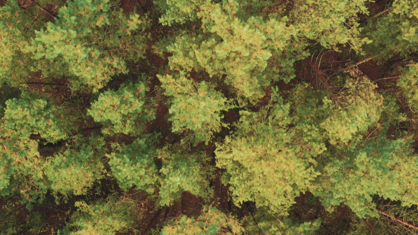Aerial View Of Green Forest Landscape. Top View In Summer Evening. Natural Backdrop Background Of Coniferous Forest. Drone View. Bird's Eye View | Shutterstock HD Video #1044927535