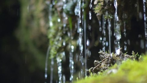 Slow motion closeup of spring water as it falls and dribbles on green moss