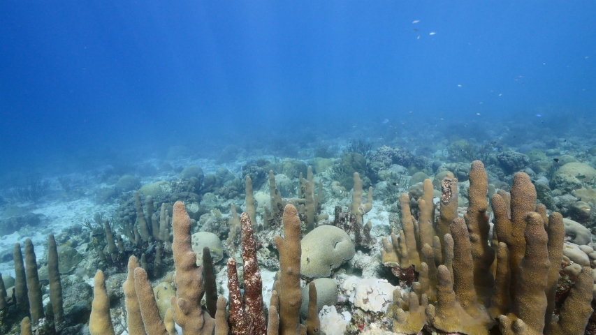 Seascape in shallow water of coral reef in the Caribbean Sea around Curacao with Pillar Coral and view to surface and sunbeam | Shutterstock HD Video #1046718415