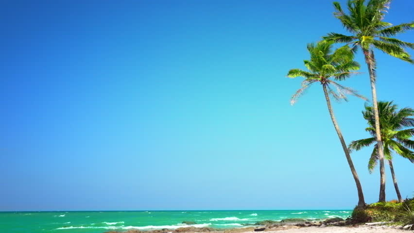 Amazing Tropical Beach Landscape With Palm Tree White Sand And Turquoise Ocean Waves Slow