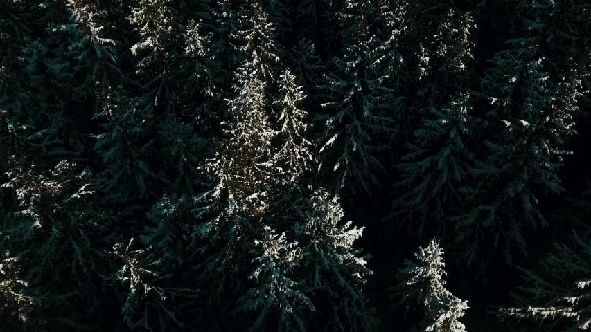Carpathian pine forest aerial video 4K snow winter. | Shutterstock HD Video #1049616835