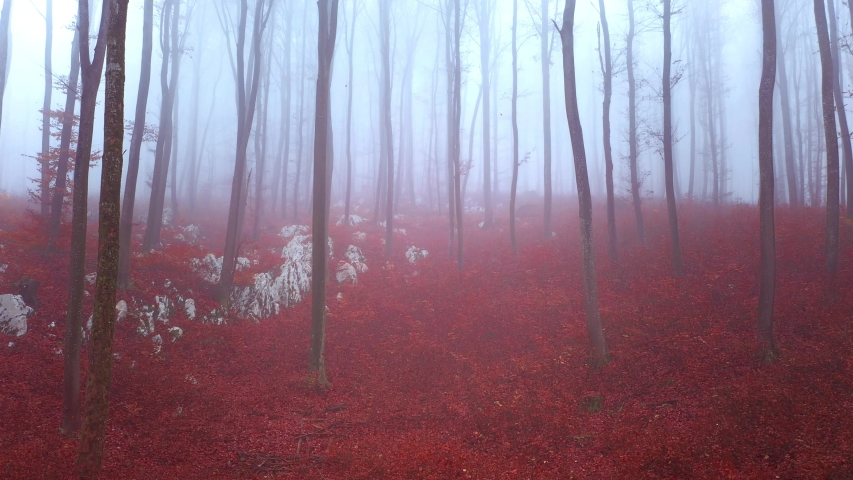 Magic morning foggy autumn season forest landscape. Flying inside fall forest with trees and falling leaves. Drone camera movement. | Shutterstock HD Video #1049652595