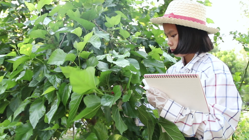 Young little girl writing on notebook to record exuberant green leaf of mulberry in the farmimg. Learning of grown non-toxic vegetables for eating in the family. In the evening. Education concept. | Shutterstock HD Video #1050020425