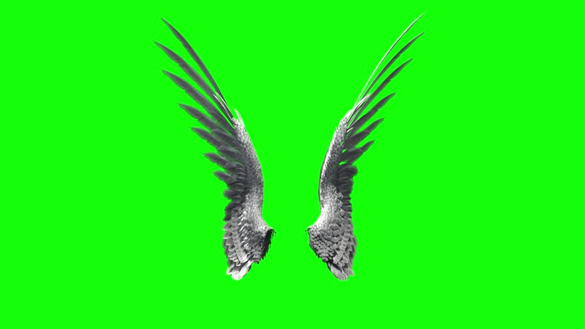 Pair of bird / angel wings flapping on a green screen for chroma key mate. | Shutterstock HD Video #10569290