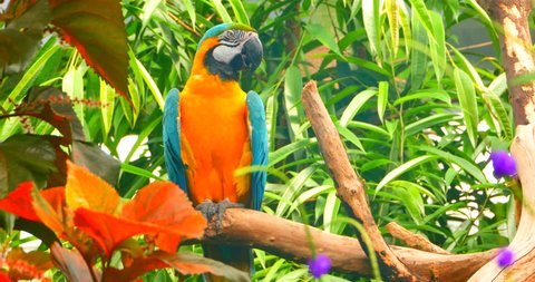 4K Parrot Close Up, Jungle Foliage on Perch