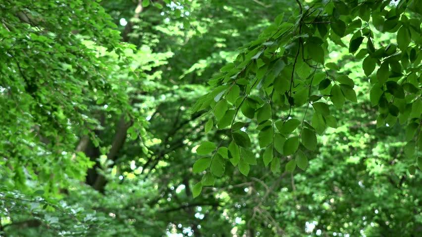 Tree branch - leaves closeup | Shutterstock HD Video #10750895
