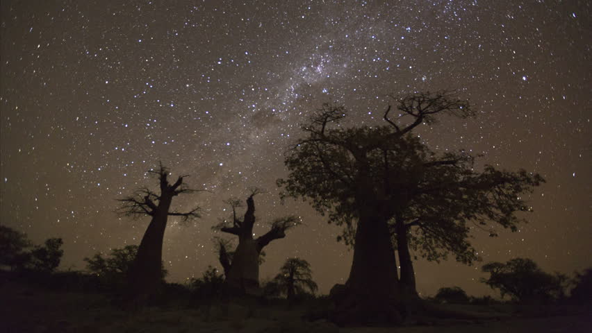 4K Star time-lapse, milky way galaxy moving across the night sky and moon rising with baobab trees in the foreground, Botswana | Shutterstock HD Video #10839263