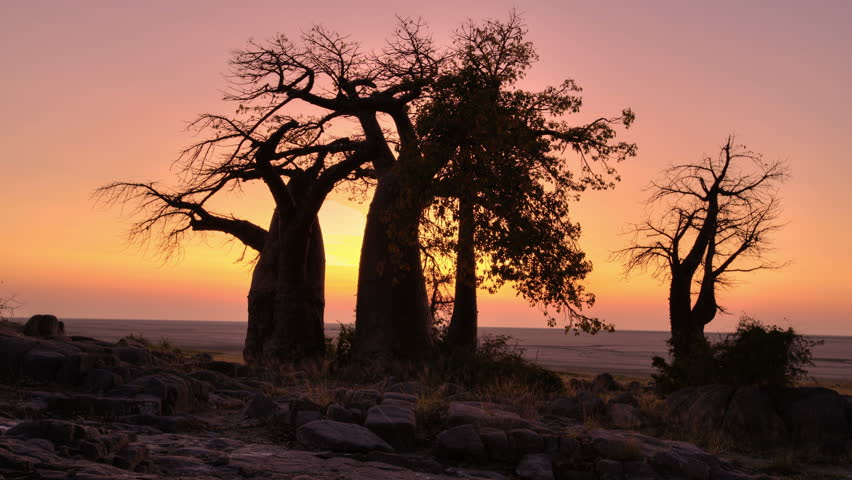 4K Time-lapse of sun rising with baobab trees in silhouette,Botswana