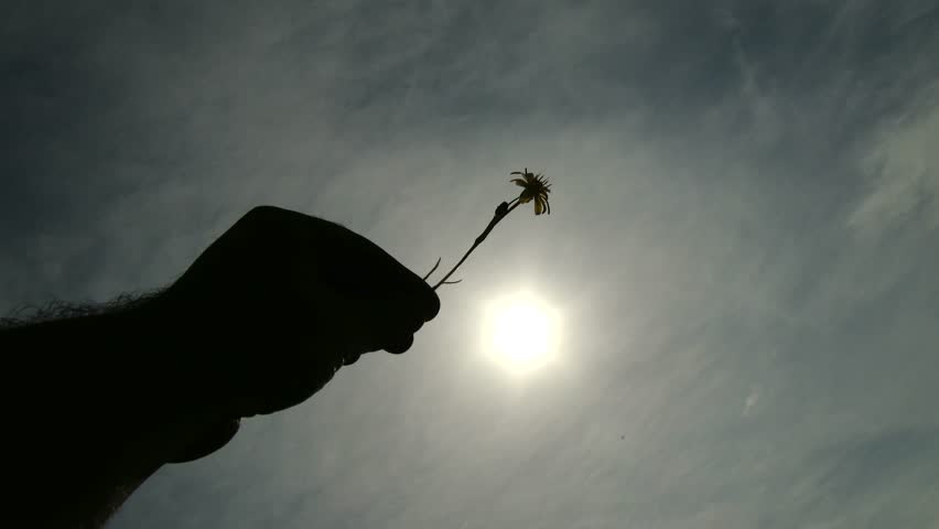 4K Hand of a Man Holding Small Spring Flower against Blue Cloudy Sky Point of View shot Concept of lifestyle, joy, fun, happiness, new life and romance. 4K 3840x2160 ultra high definition   Shutterstock HD Video #10897178
