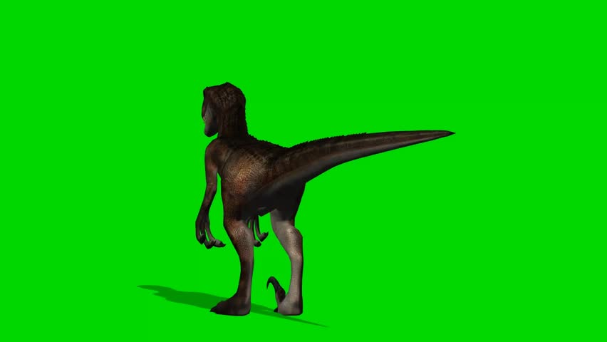 Velocirapor Dinosaurs stand and look around - green screen  | Shutterstock HD Video #10961957