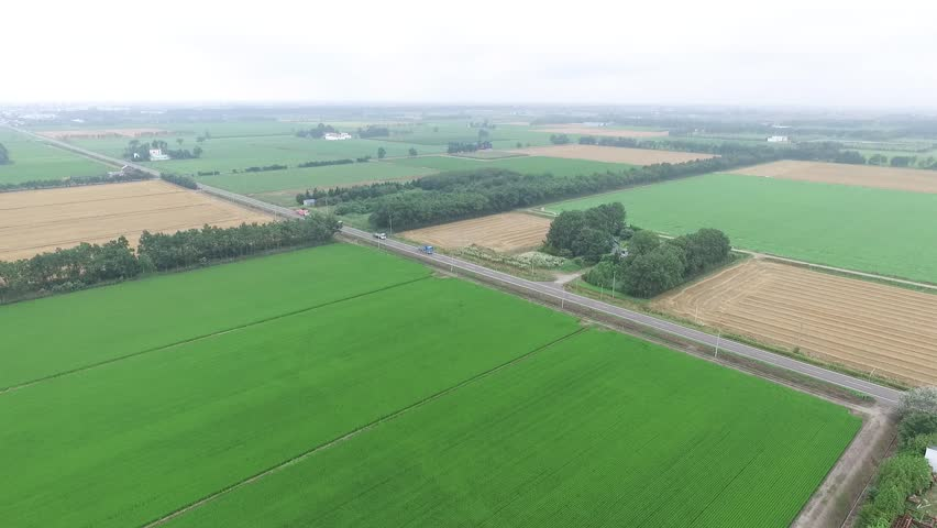 Empty drone imaging: paddy landscape _4 / July 31, 2015 in Japan of the shooting in Hokkaido / Imaging that were transferred sky using the drone situation of steadily growing rice in the summer.   Shutterstock HD Video #11016815