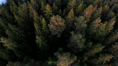Spruce and pine trees are seen from above in the Stockholm Archipelago of Sweden