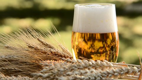 pouring beer into the glass, detail of beer glass with wheat and barley