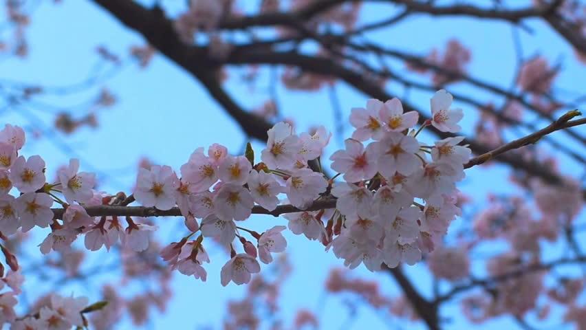 Flower / Australia-Oceania | HD Stock Video 407-178-750 ...