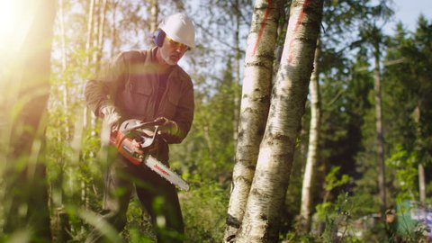 Lumberjack is Felling Tree with Chainsaw. Shot on RED Cinema Camera in 4K (UHD).