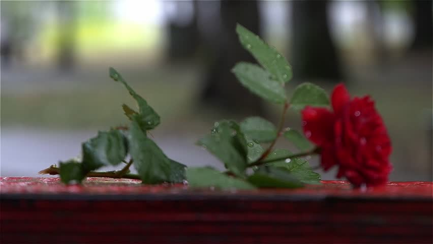 Symbolic Scene of Love Affair,red Stock Footage Video (100% Royalty-free)  11338355 | Shutterstock