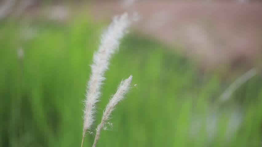 Header of Liliopsida