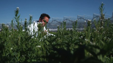 MS TU Scientist examining flora at a greenhouse / Salem, Utah, USA.