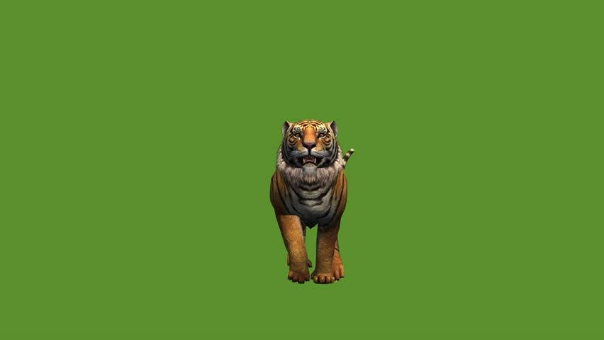 Tiger jumped to attack prey,wildlife animals habitat. cg_02010