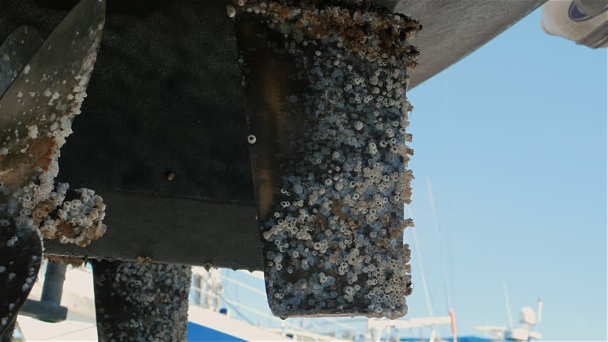 Barnacle encrusted propeller and rudder From twin prop boat Sept 2015