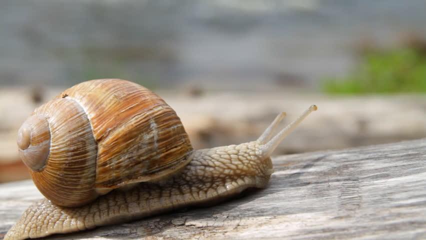 Header of snail