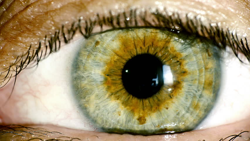 4K female green eye macro,iris contracts.4K real time extreme close up shot of the wide open human eye of a female.The iris is contracting. #12056165
