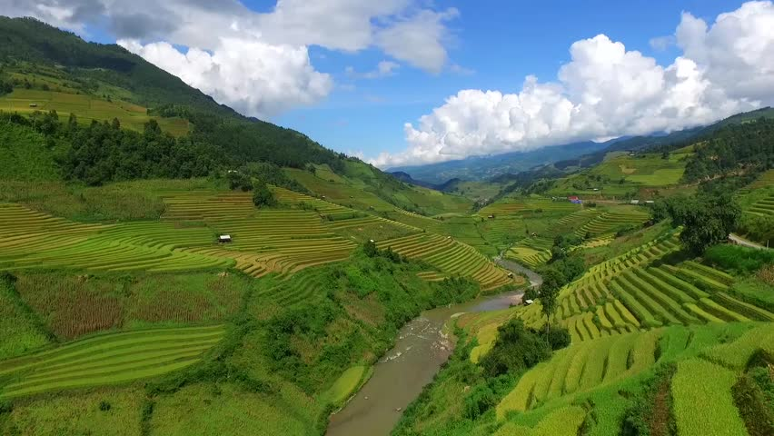 Aerial view from flycam of terraced rice field in harvest season in Mu Cang Chai, Vietnam.