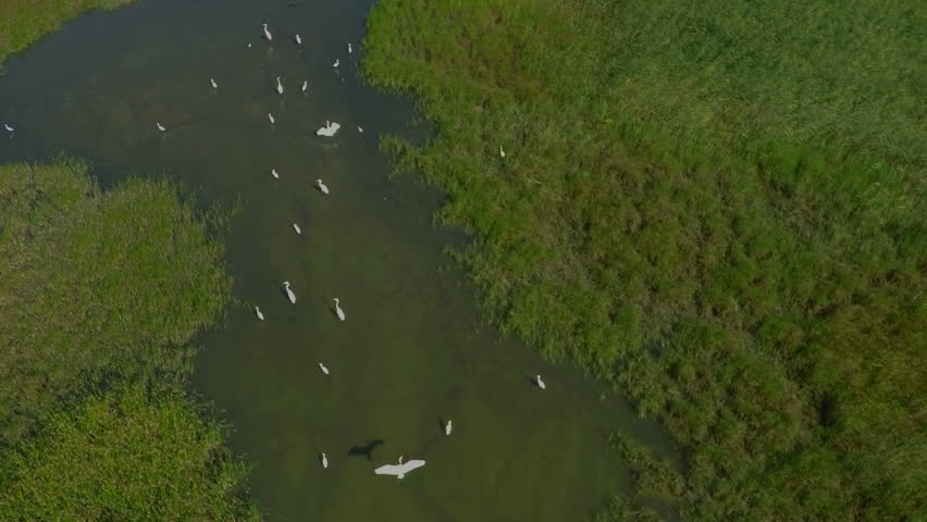description aerial flying birds - photo #15