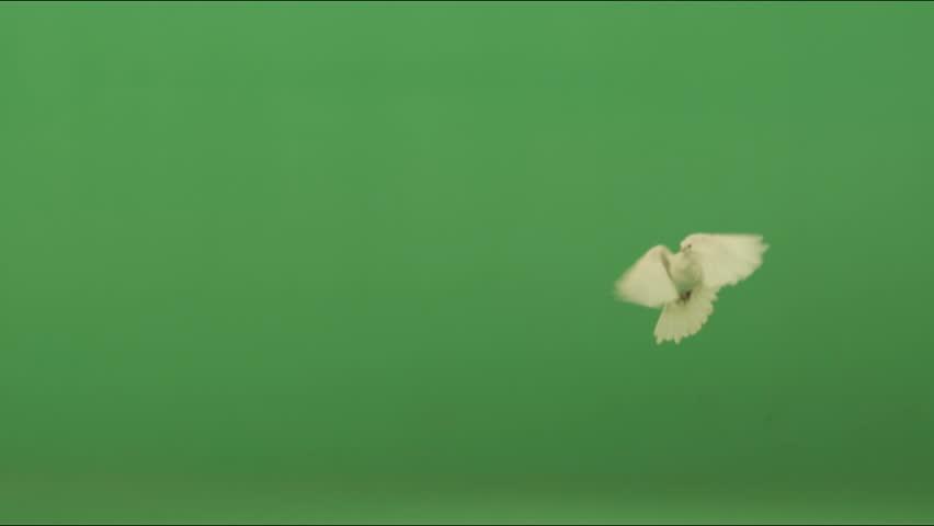 Doves  | Shutterstock HD Video #1216375