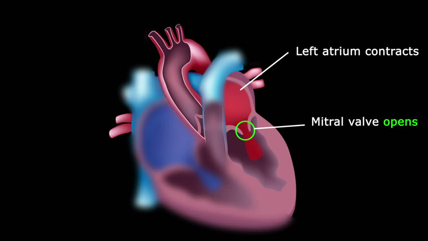 Blood flow through the heart tutorial