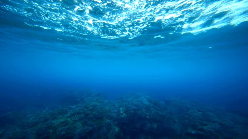 Underwater background. | Shutterstock HD Video #1239175