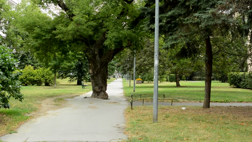 view of the big tree stands middle of the sidewalk in the park