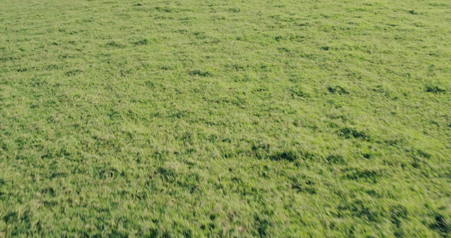 grass field aerial. Aerial Shot Revealing Beautiful Sunny Ocean Landscape. Flying Low Over Green Grass Field Off Sea Cliffs. In 4K Stock Footage Video 12464285 |