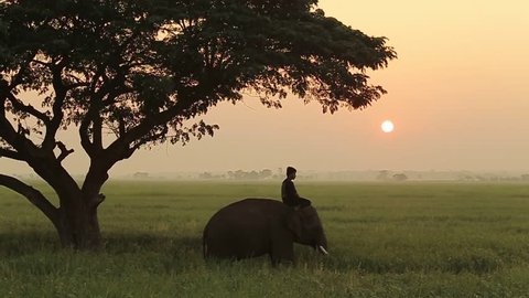 Mahout and the elephant in the middle of the field in the morning.