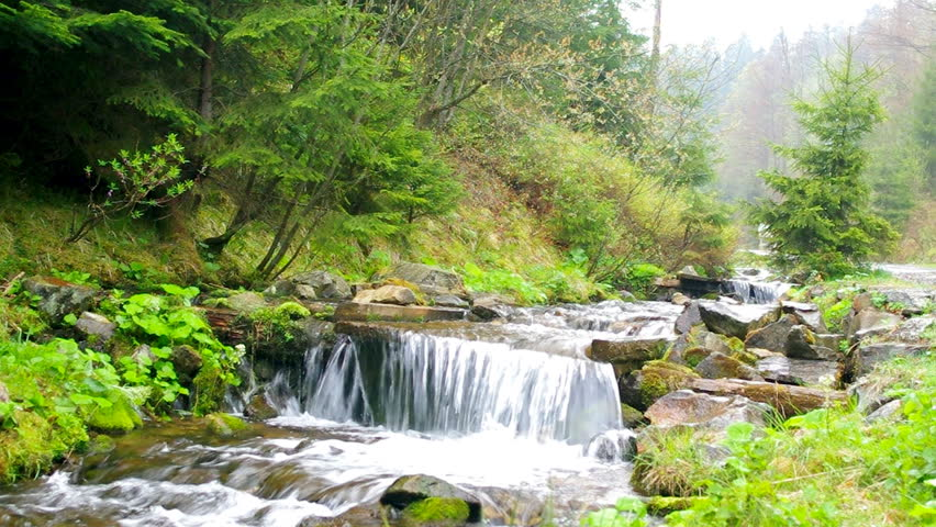 Beautiful mountain creek in the green summer forest