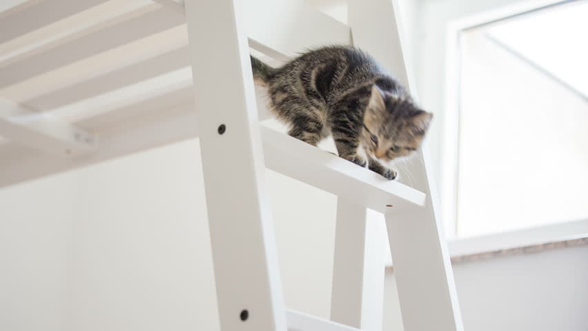 Kitten climbing down the ladder almost falling. Baby cat walking on tall wooden bed and trying to get down over the ladder almost falling down, catching up. | Shutterstock HD Video #12716735