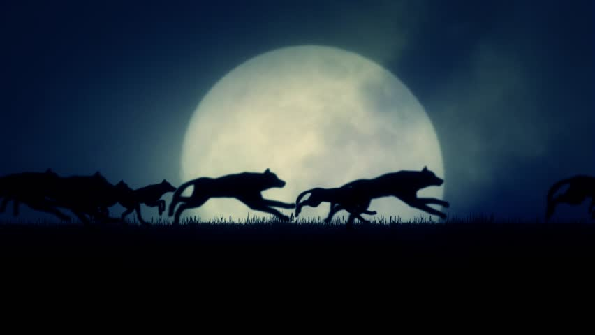 A Pack of Wolves Running on a Rising Full Moon Background | Shutterstock HD Video #12719375