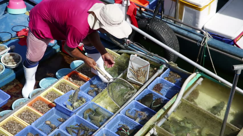 Sorting fish in on boat fish tanks ready for selection by customers at the keyside, man with net scooping fish between fish tanks, view of adjacent boat, overhead views, sunny hot day