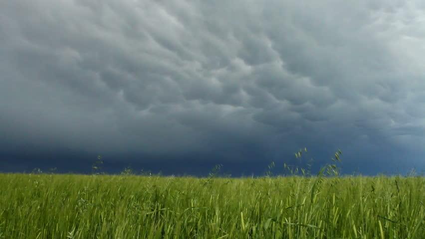 Storm cloud over grain field