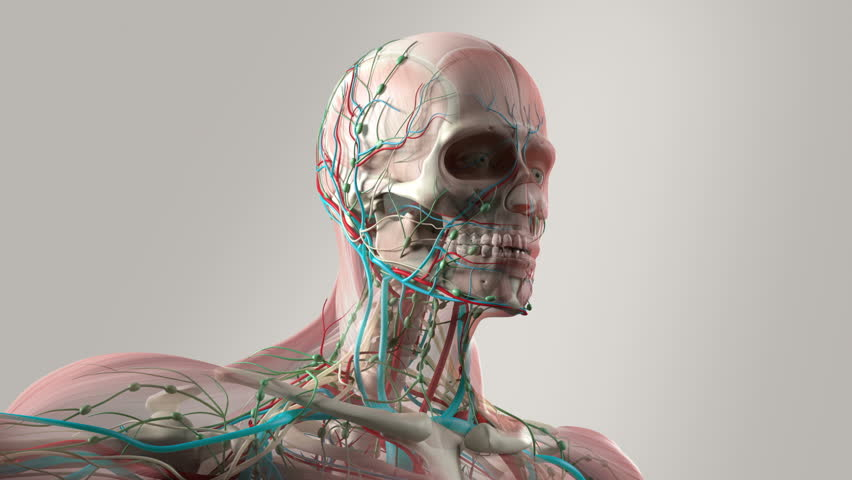 Human Anatomy Animation Rotating View Stock Footage Video 100