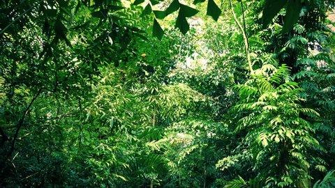 Moving Under Dense Jungle Canopy