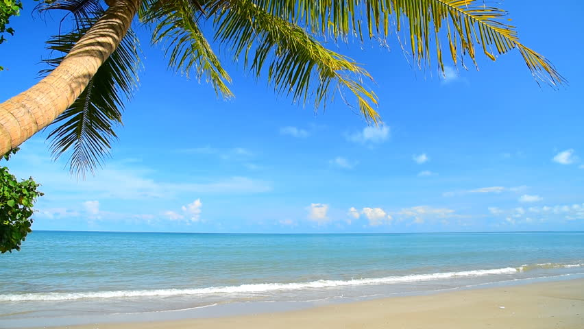 Tropical beach and palm tree | Shutterstock HD Video #12846605