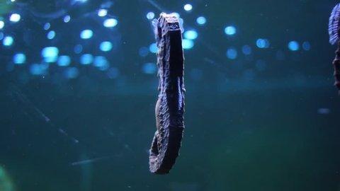 sea horse under sea