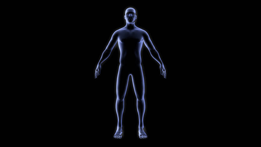 Human Body Anatomy Outline Stock Video Footage 4k And Hd Video