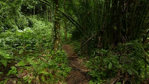 POV walk through rainforest path, glide shot, exotic plants around. First person view, struggle through tropical forest, clear ground pathway, surrounded by overgrowth plant. High humidity, wet leaves