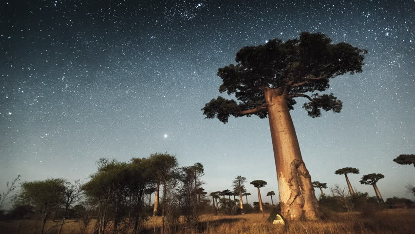 Starry sky and huge baobab tree 4k time lapse