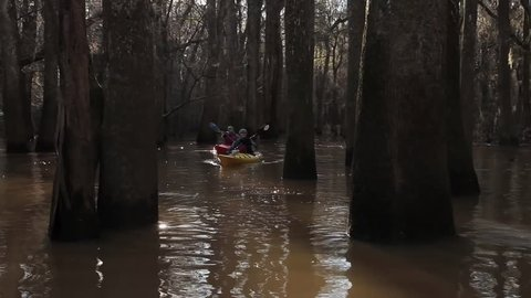 CIRCA 2010s - Various shots of kayakers paddling through the Congaree National Park wilderness in South Carolina.