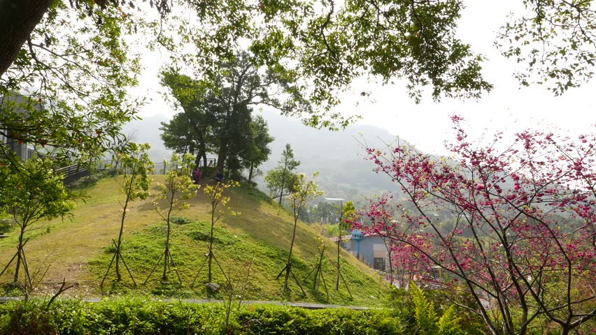 Meadow On The Hillside Mountains Area Blossom Tree Green Grass And Cherry Blossoms