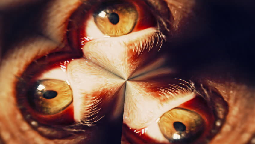 A scary macro shot of the eye of a man girl, distorted and tripled. As seen as i.e. a person under drugs or having a nightmare. Be creative!